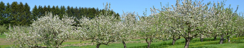Wisconsin Fruit